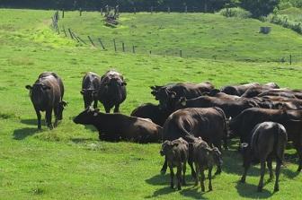 土用の丑の日うなぎ以外牛